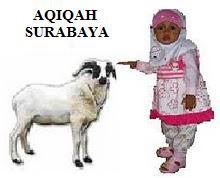 kambing aqiqah surabaya